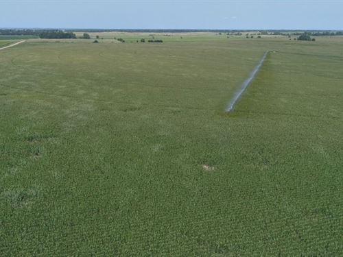 Kearney County Pivot And Dryland : Minden : Kearney County : Nebraska