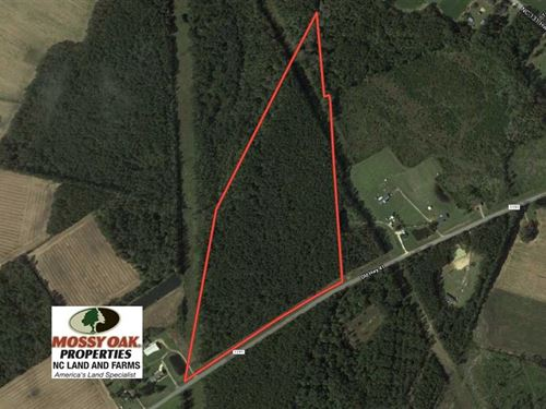31.7 Acres of Hunting And Timber : Bladenboro : Bladen County : North Carolina