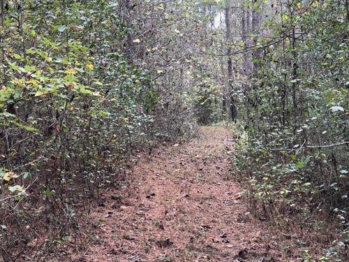Randall 37 Acres : Wadesboro : Anson County : North Carolina