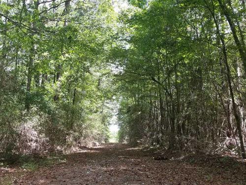 Taylor Road Tract, Winn Parish, 35 : Olla : Winn Parish : Louisiana