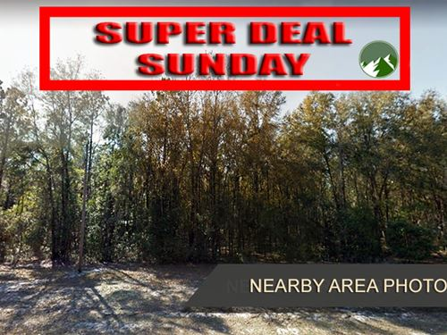 Promo Sale, 1 Acre in Gilchrist, FL : Bell : Gilchrist County : Florida