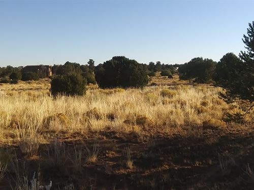 Perfect 1.06 Acre Lot Just For You : Williams : Coconino County : Arizona