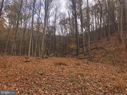 Wilson Run Trail : Milam : Hardy County : West Virginia