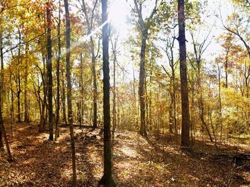 Bartrum Creek Tract : Elberton : Elbert County : Georgia