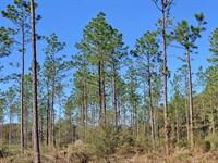 Harrelson Tract : Bay Minette : Baldwin County : Alabama