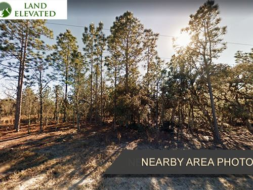 Forested Land in Williston, FL : Williston : Levy County : Florida