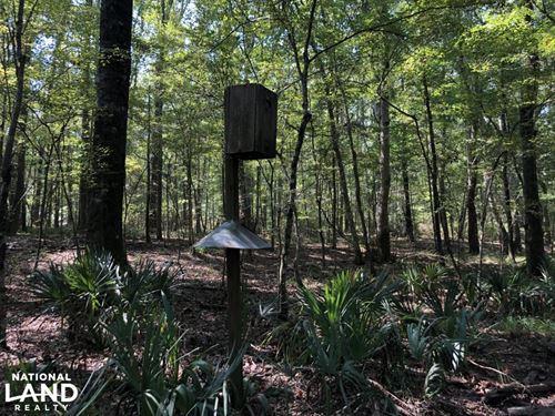 Hardaway Hardwood Hunting Tract : Hardaway : Macon County : Alabama