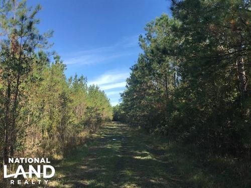Plantersville Timber And Rec : Georgetown : South Carolina