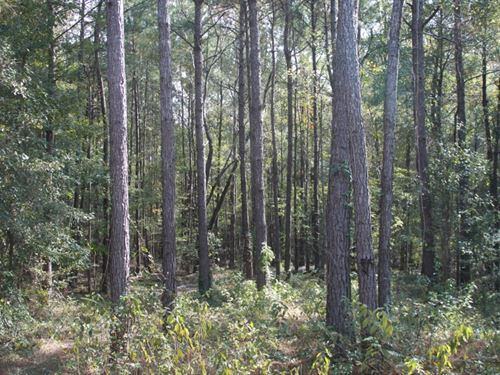 30 Acres In Lamar County In Purvis : Purvis : Lamar County : Mississippi