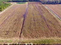 Hunting Property in Hyde County, NC : Scranton : Hyde County : North Carolina