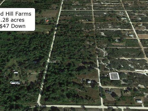 .28 Acre Lot Near Avon Park Airport : Avon Park : Highlands County : Florida