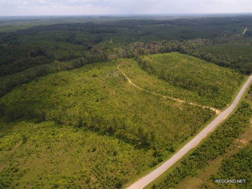 70 Ac, Timberland With Home Site : Farmerville : Union Parish : Louisiana