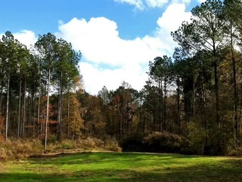 260.98 Acres With A Home In Wilkins : Woodville : Wilkinson County : Mississippi