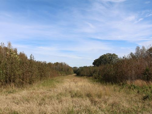 383.9 Acres In Montgomery County : Winona : Montgomery County : Mississippi