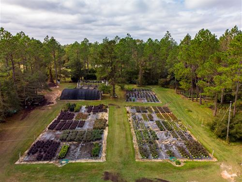 Arbor Lane Nursery : Vernon : Washington County : Florida