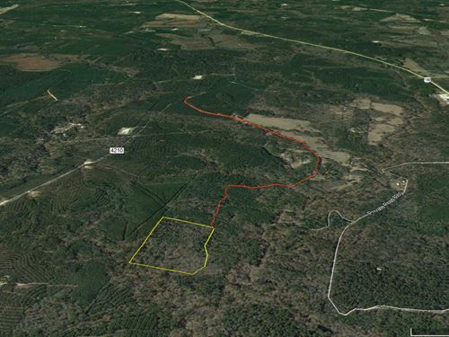 21 Acres Off CR 4210 : Woodville : Tyler County : Texas