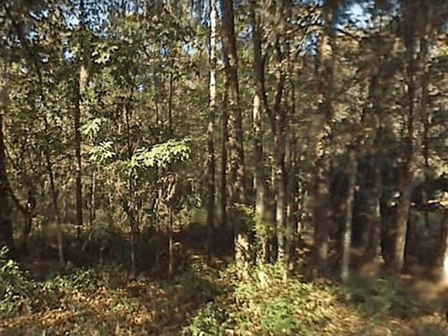 Private Wooded Lot, No 135 : Ocala : Marion County : Florida