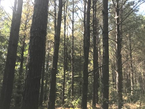100 Acres In Carroll County In McCa : McCarley : Carroll County : Mississippi