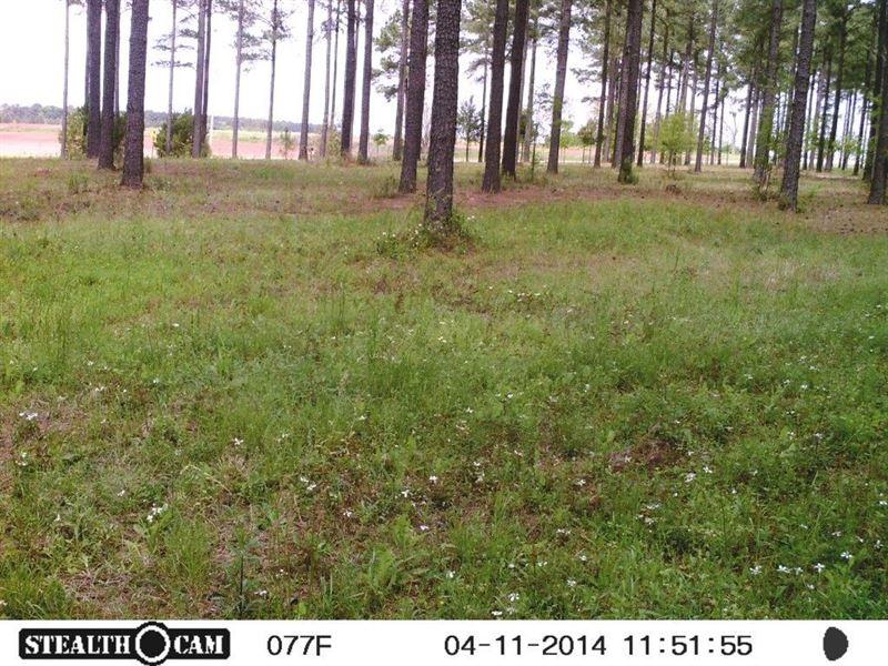 Land in Henry County Alabama : Shorterville : Henry County : Alabama