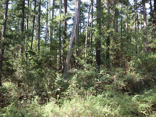 Vacant Land For Sale in Fulton CO : Agnos : Fulton County : Arkansas