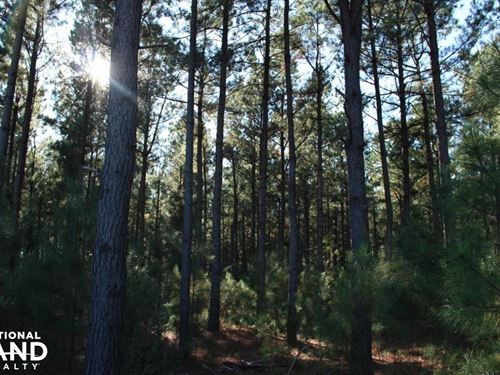 Highway 80 Timber Tract : Waynesboro : Burke County : Georgia