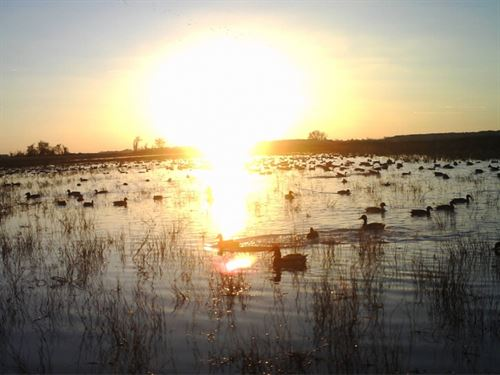 1,050 Acres In Mississippi County : Blytheville : Mississippi County : Arkansas