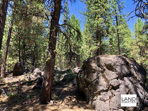 Gorgeous Property Covered In Trees : Bonanza : Klamath County : Oregon