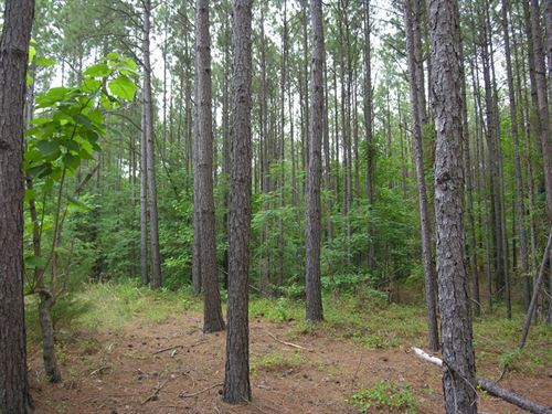 6.69 Acres With Owner Financing : Tignall : Wilkes County : Georgia