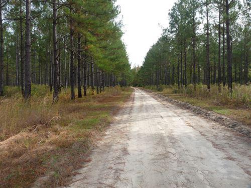 Joseph South : Greeleyville : Williamsburg County : South Carolina