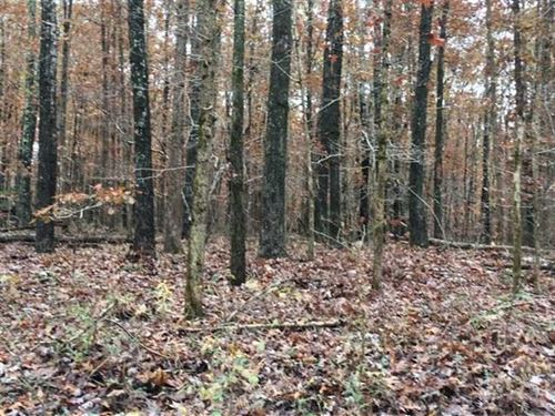 10 Acres Close to Schools, Paved : Mountain View : Shannon County : Missouri