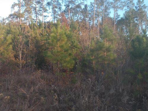 Wiley Drive : Carthage : Moore County : North Carolina
