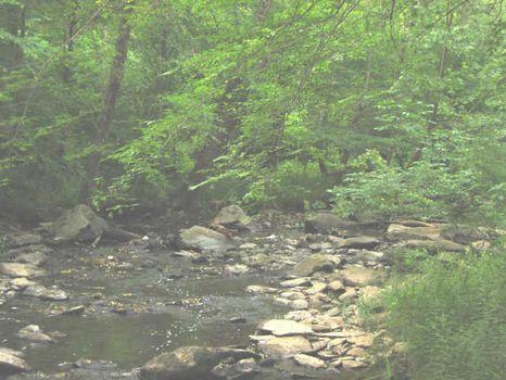 Frontage On Brush Creek : Siler City : Chatham County : North Carolina