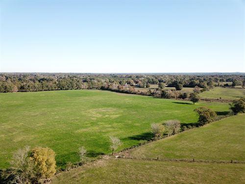 Davis Farm, Briar Hill, 760 Acres : Goshen : Pike County : Alabama