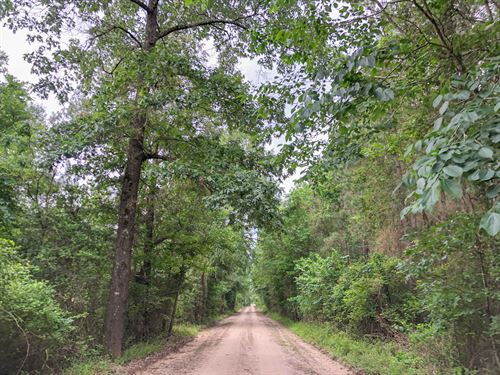 177 Acres CR 4545 Tract 1198 : Kennard : Houston County : Texas