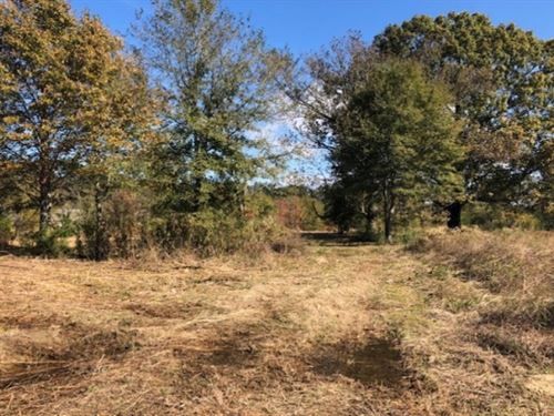36.9 Acres In Madison County In Can : Canton : Madison County : Mississippi