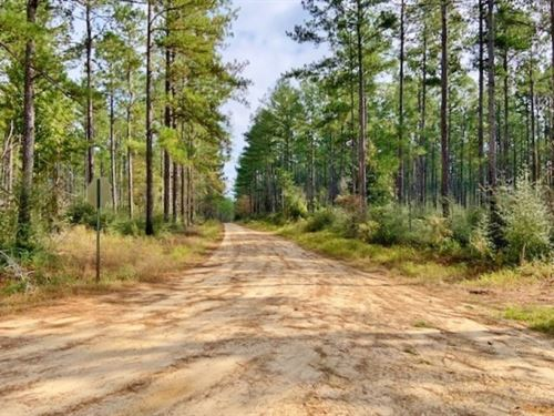 1118 Acre Timberland Investment Lan : Lucedale : George County : Mississippi