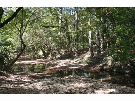 415 Acre Investment Property : Hazlehurst : Copiah County : Mississippi