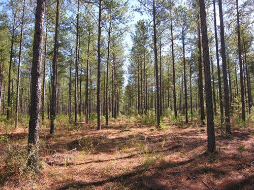 102.6 Acres Older Planted Pines : Waynesboro : Burke County : Georgia