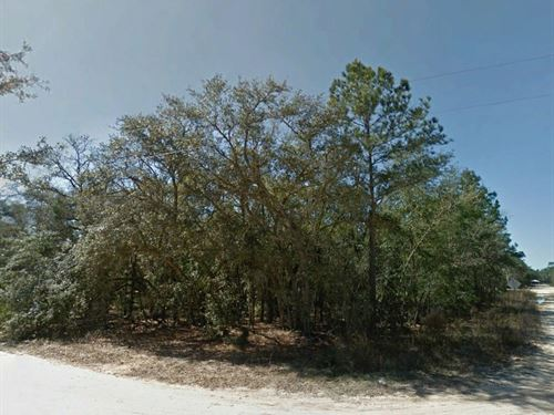 Paved Road Lot Near Town, No 253 : Interlachen : Putnam County : Florida