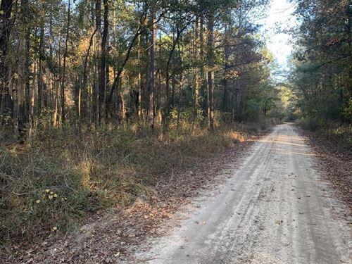 Oliver Carlis Road Hunting & Timber : Tuskegee : Macon County : Alabama
