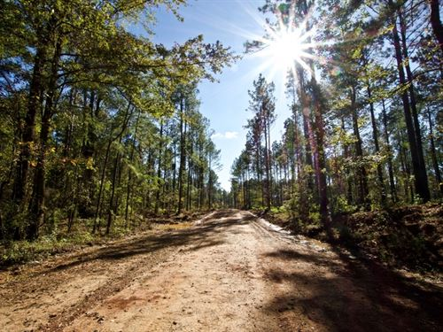 Bossier Parish Timber/Hunting Land : Cotton Valley : Bossier Parish : Louisiana