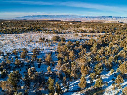 Western Colorado Scenery Wildlife : Montrose : Ouray County : Colorado