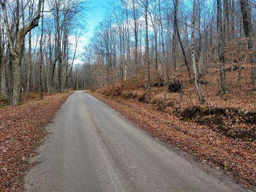 Irish Hill Forest : Fine : Saint Lawrence County : New York