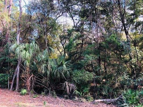 .46 Acre Wooded Lot 778986 : Chiefland : Levy County : Florida