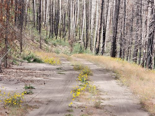 Get Away To The Colorado Mountains : Fort Garland : Costilla County : Colorado