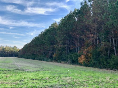 Hunting Tract in Hyde County, NC : Scranton : Hyde County : North Carolina