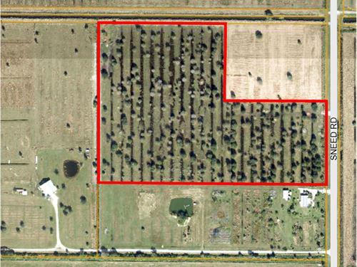 Pasture w Mature Oaks, Paved Road : Fort Pierce : Saint Lucie County : Florida