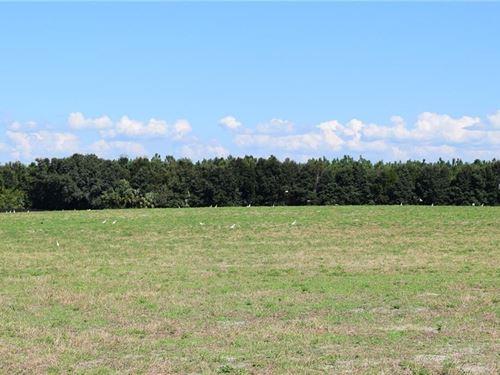Owner Finance Beautiful Pasture : Brooksville : Hernando County : Florida