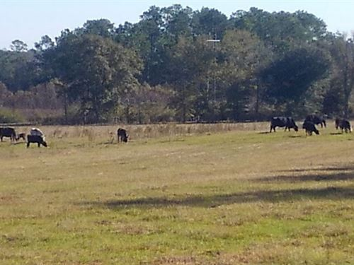Danford Bay Road Farm : Graceville : Jackson County : Florida