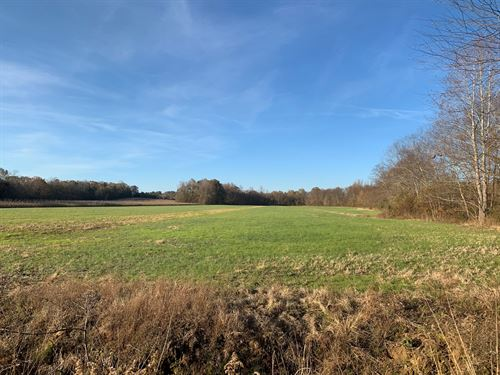Excellent Hunting Land in TN : Sardis : Decatur County : Tennessee